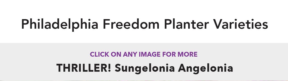 Philadelphia Freedom Planter Varieties - Sungelonia
