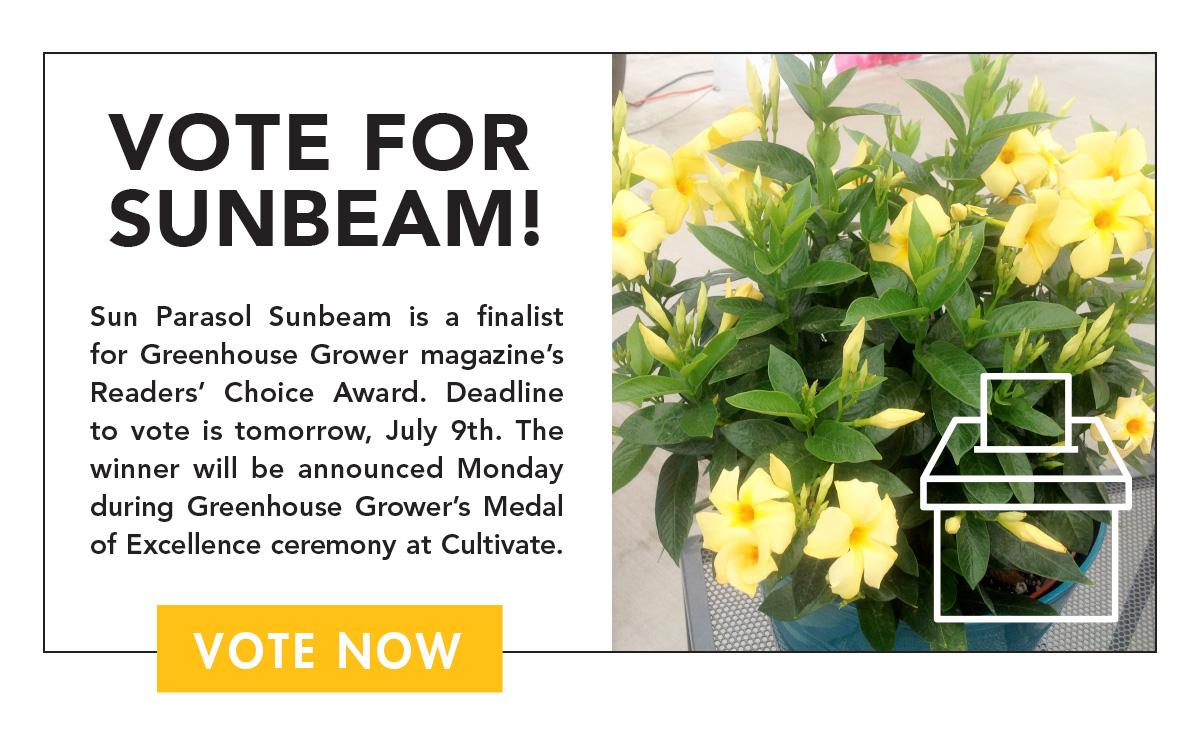 Vote for Sunbeam