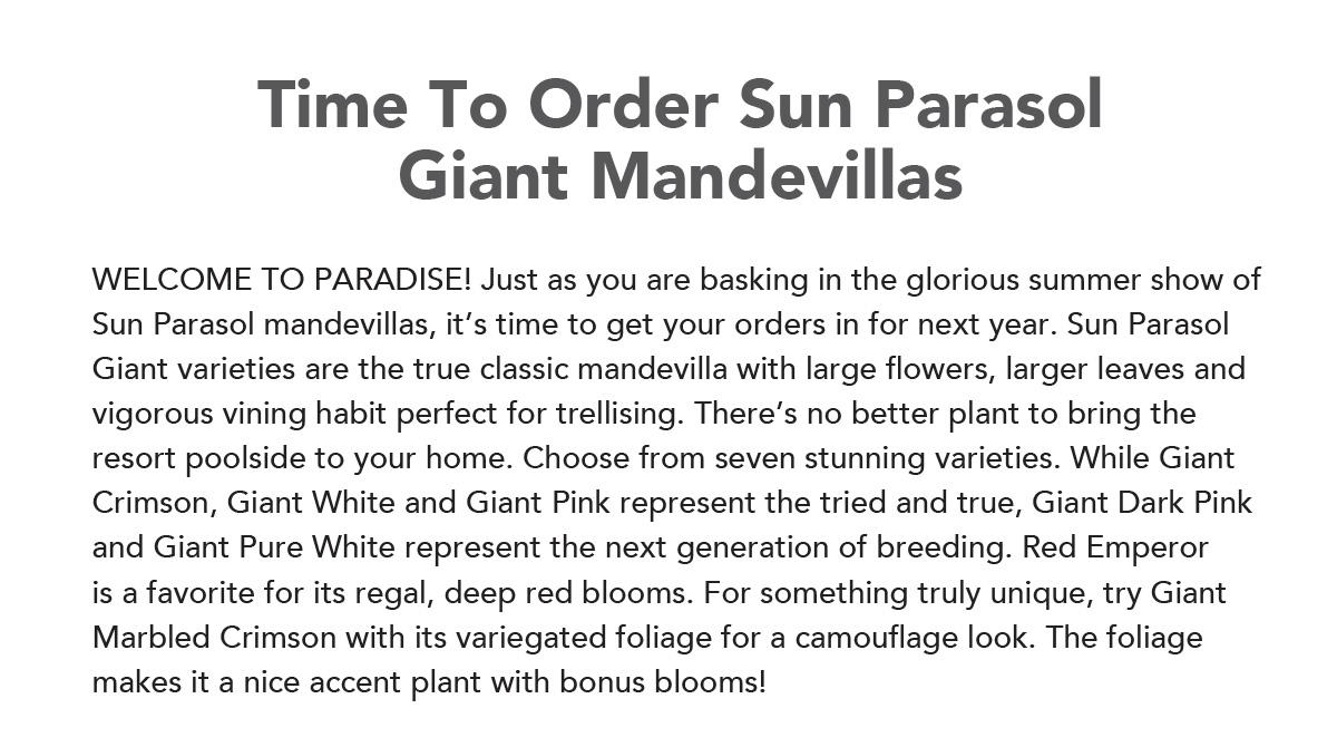 SUN PARASOL Giant Mandevillas