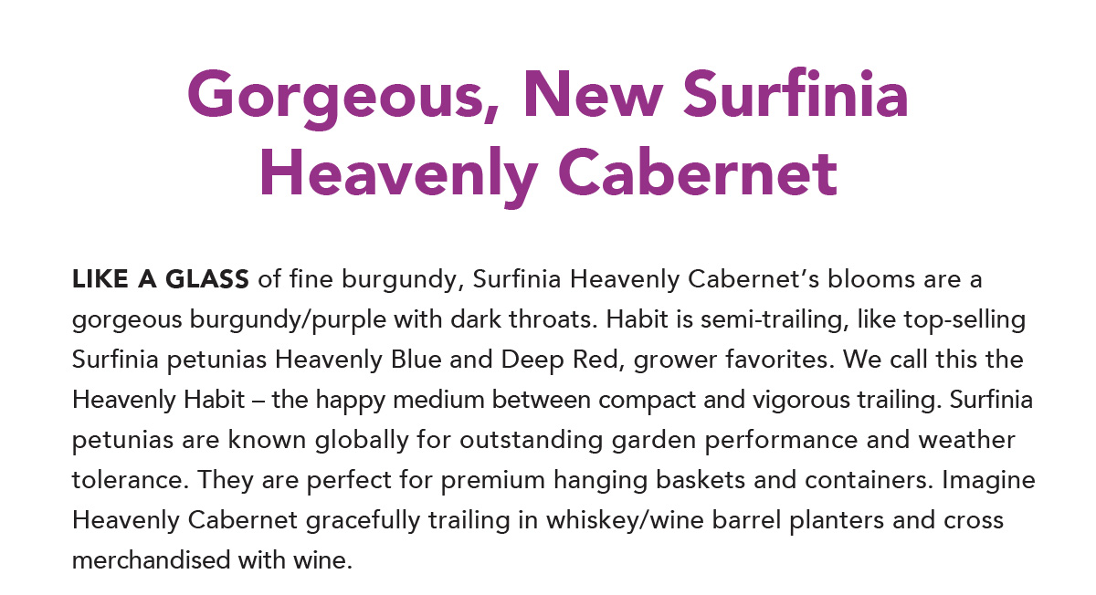Gorgeous, New Surfinia Heavenly Cabernet