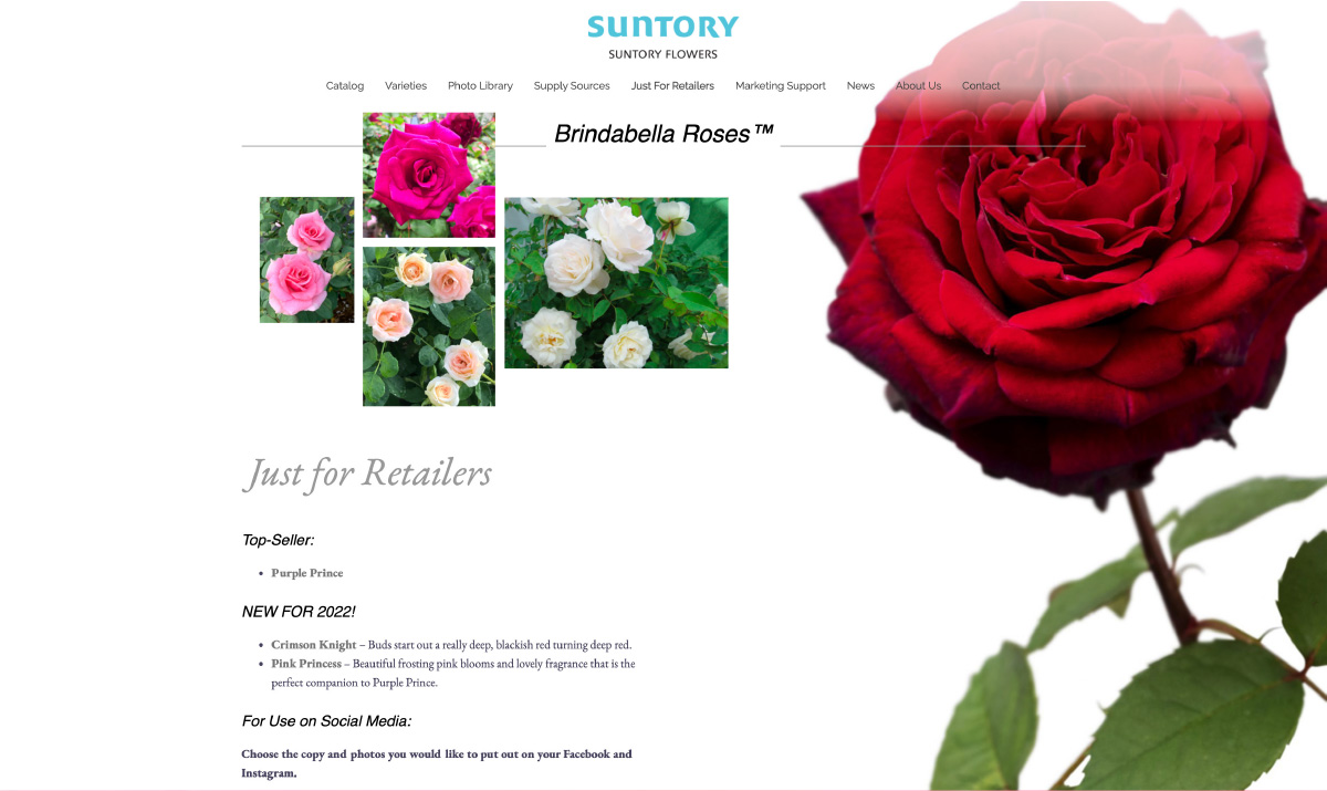 Just for Retailers - Brindabella Roses