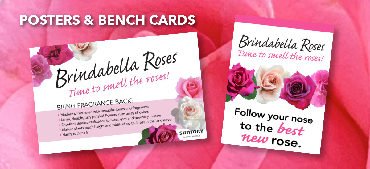 Posters and bench cards
