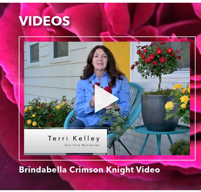 Watch the Brindabella Crimson Knight Video