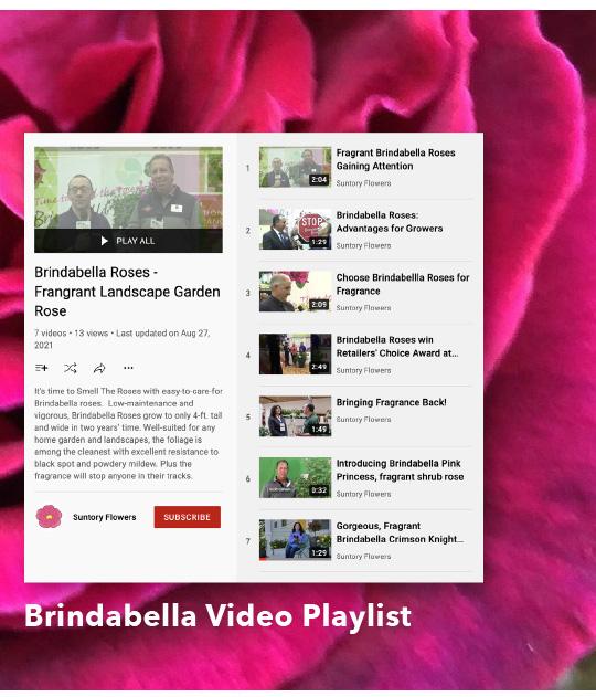 Brindabella Video Playlist